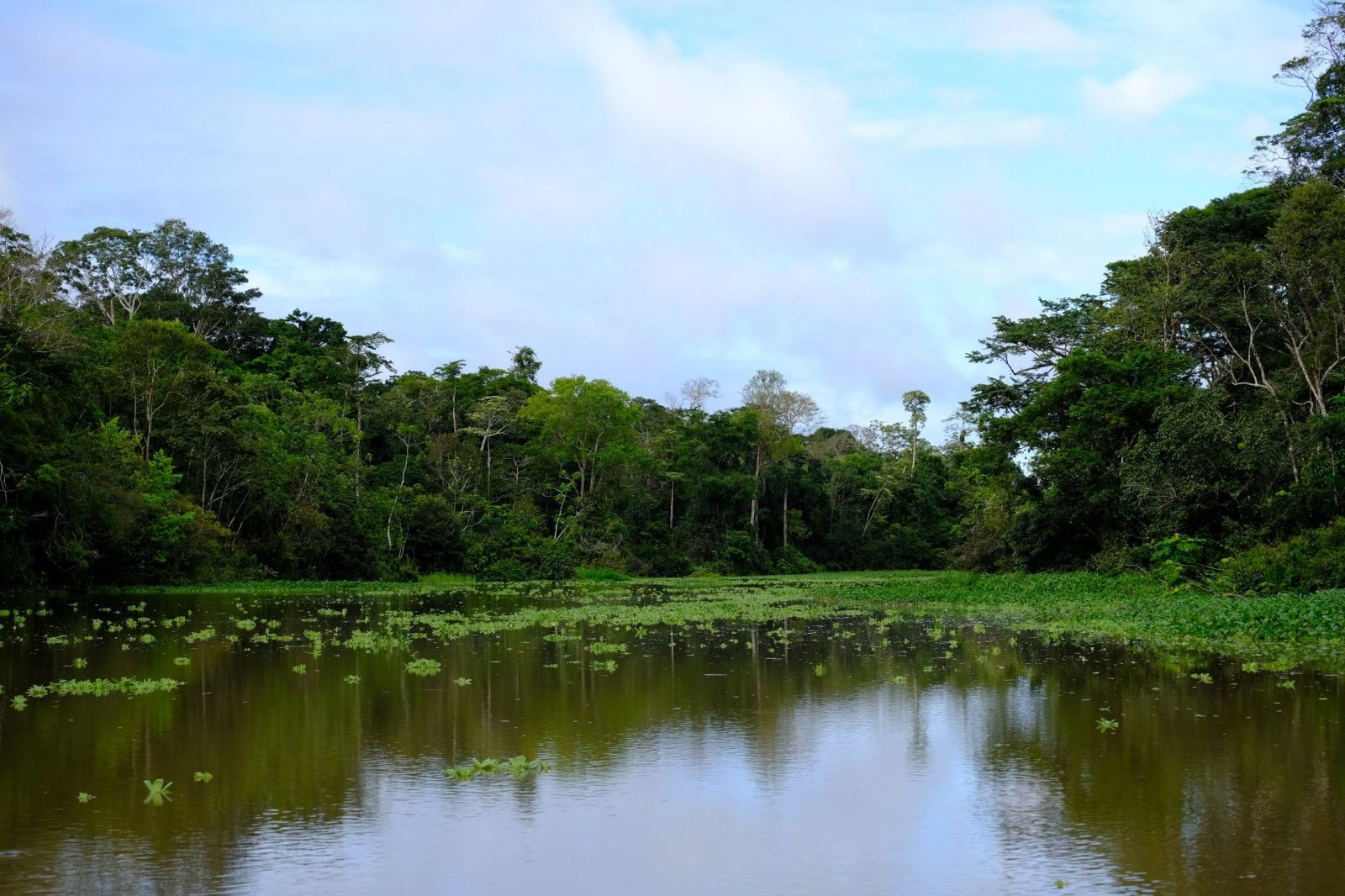 Amazon lake and forest.jpg
