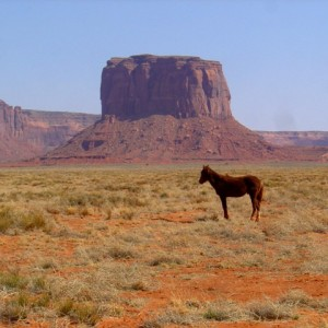 Wild-Wild Horses, Monument Valley, AZ